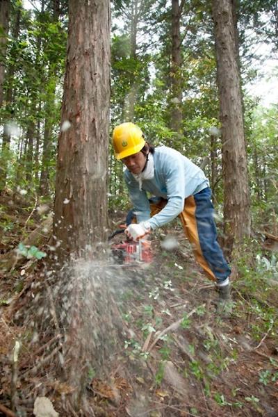 四万十町森林組合温室効果ガス吸...